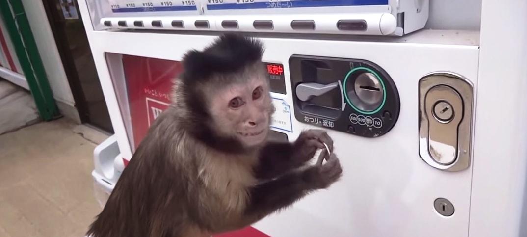 monkey vending machine