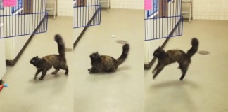 cat who can't jump
