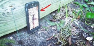 cellphone with frog