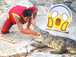 man putting his hands inside a crocodile's mouth