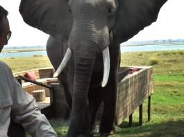 Zimbabwe Elephant Attack