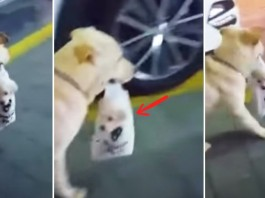 dog carries puppy in bag